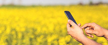 man-field-smartphone-yellow-2